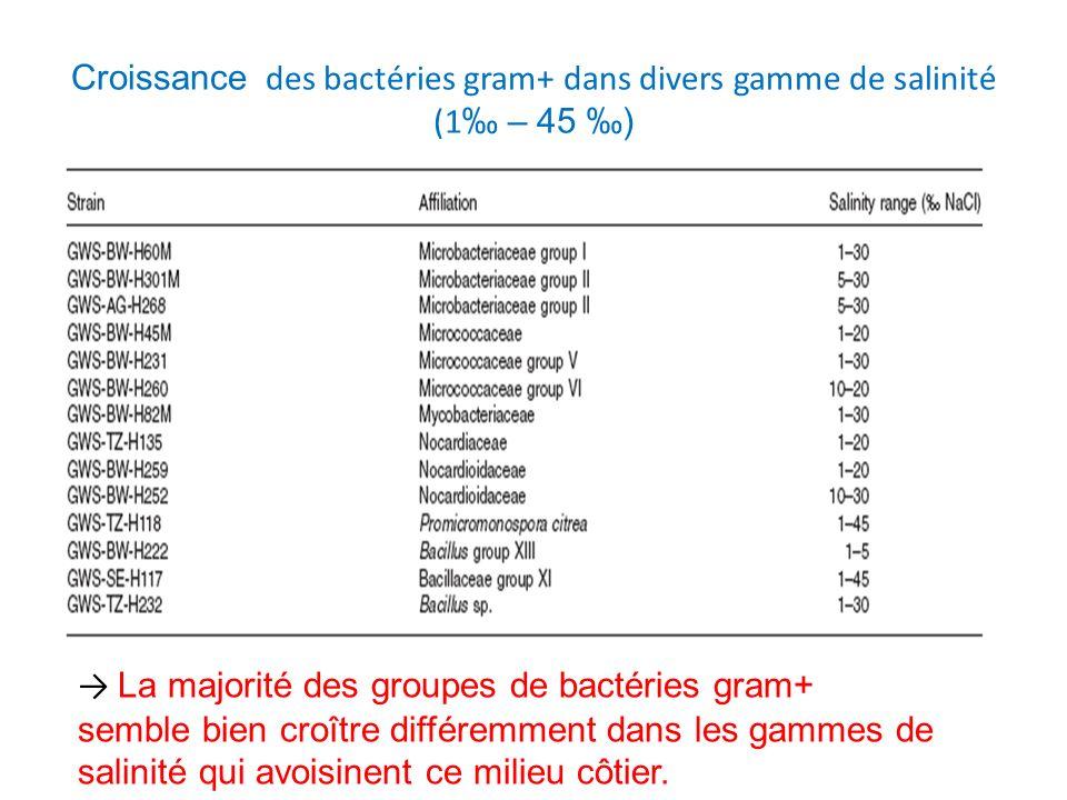 Mise en évidence du statut indigène des bactéries gram+ dans lenvironnement marin La communauté bactérienne gram+ semble être indigène à cet environnement marin par : lAdaptation des bactéries gram+ aux conditions de salinité ambiante de la mer de Wadden.