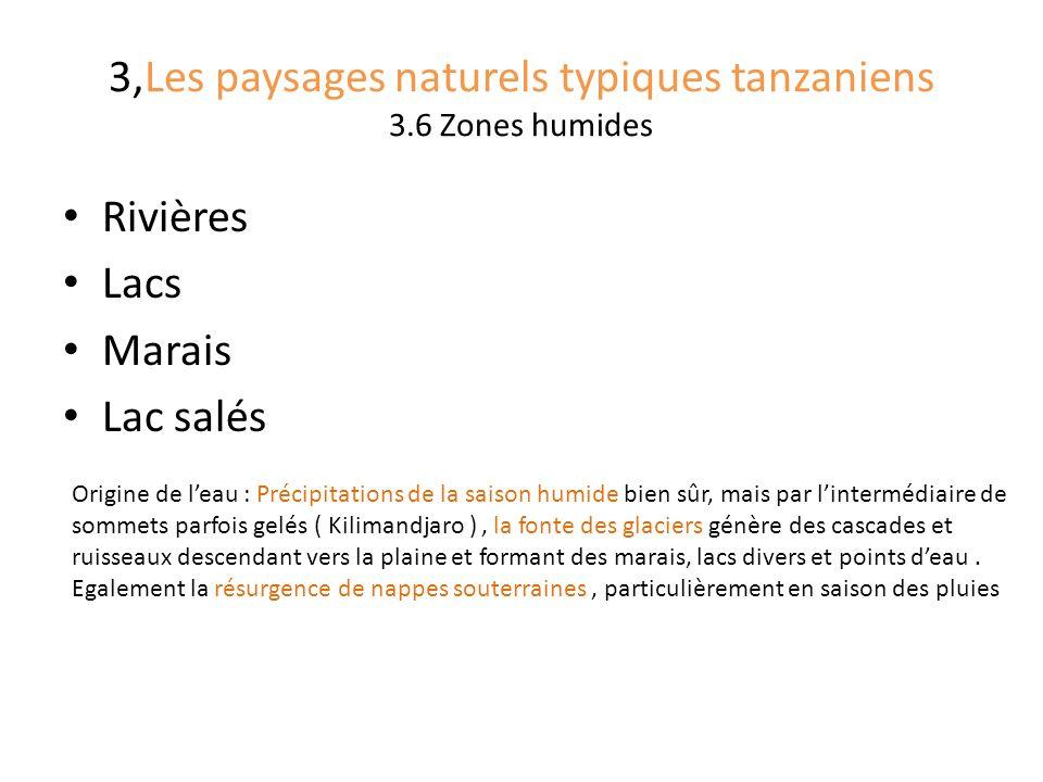 3,Les paysages naturels typiques tanzaniens 3.6 Zones humides Rivières Lacs Marais Lac salés Origine de leau : Précipitations de la saison humide bien