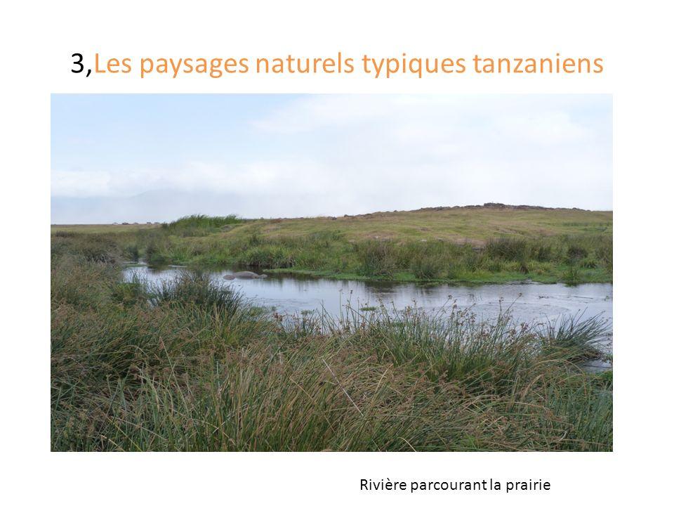 3,Les paysages naturels typiques tanzaniens Rivière parcourant la prairie
