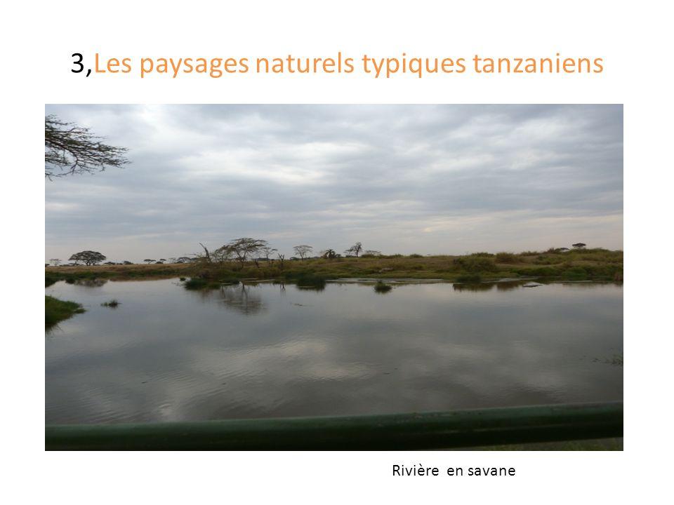 3,Les paysages naturels typiques tanzaniens Rivière en savane