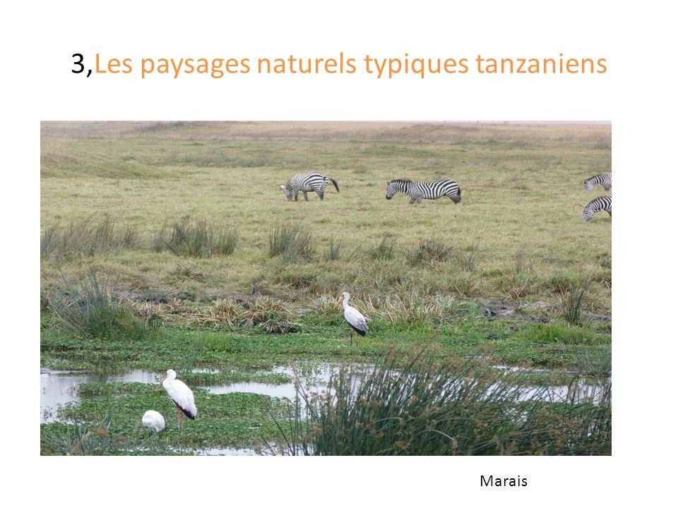 3,Les paysages naturels typiques tanzaniens Marais