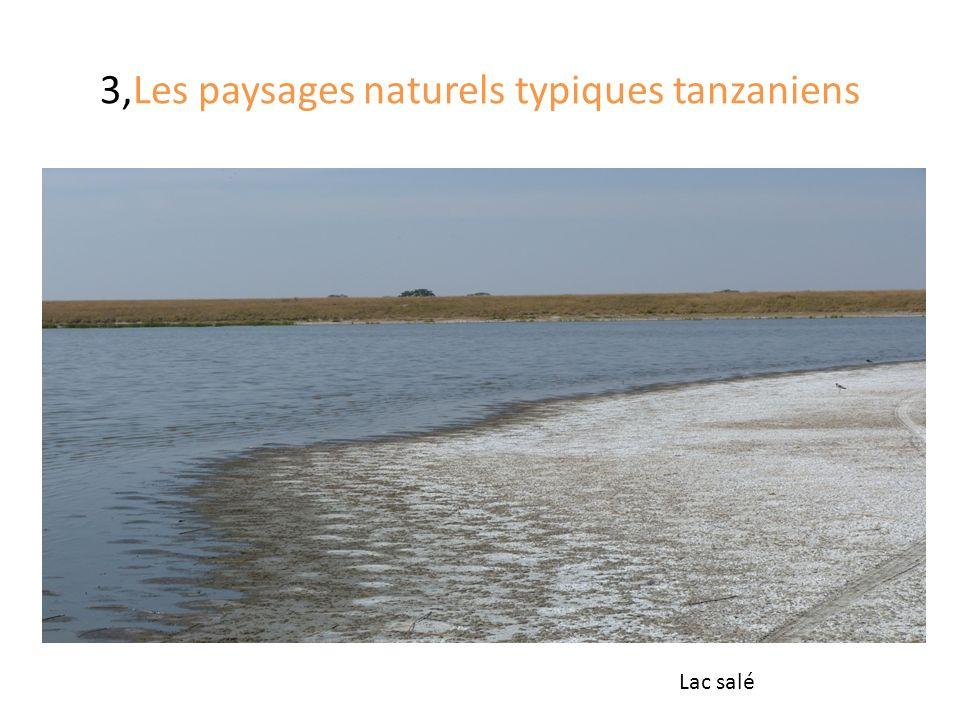 3,Les paysages naturels typiques tanzaniens Lac salé