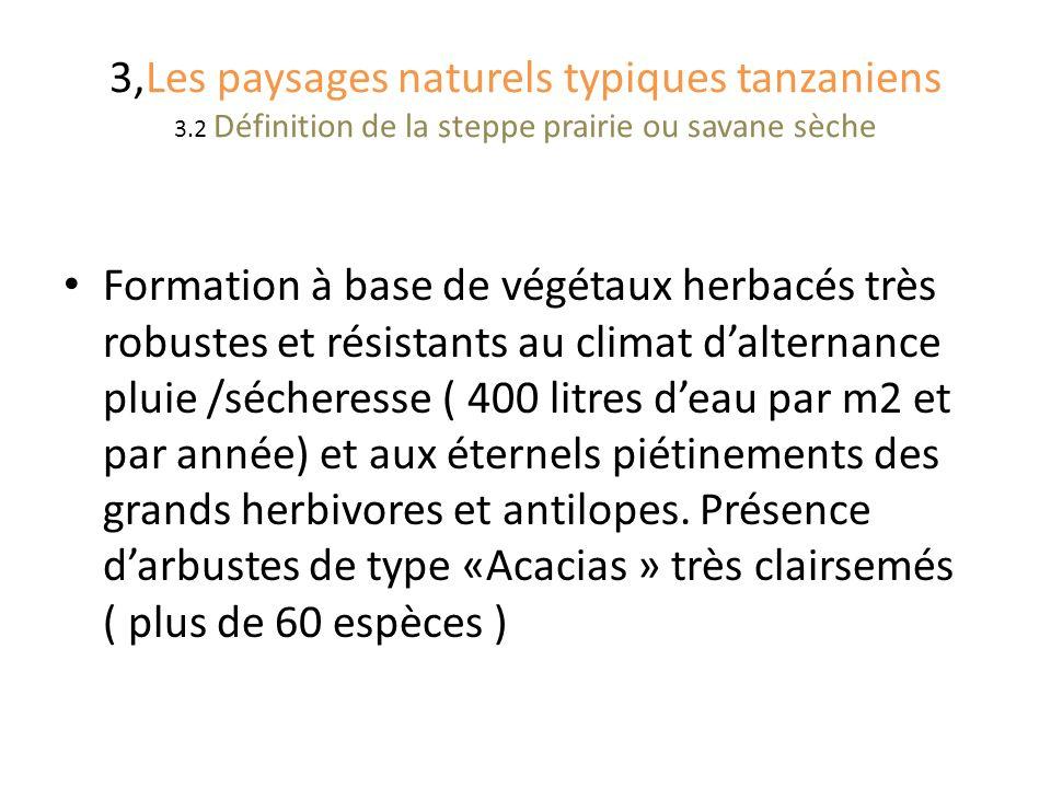 3,Les paysages naturels typiques tanzaniens 3.2 Définition de la steppe prairie ou savane sèche Formation à base de végétaux herbacés très robustes et