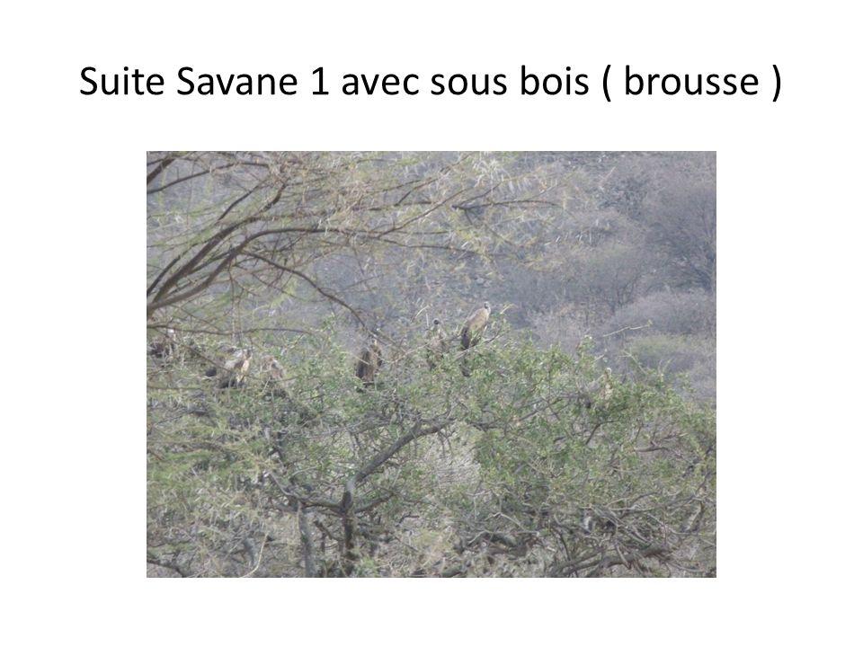 Suite Savane 1 avec sous bois ( brousse )