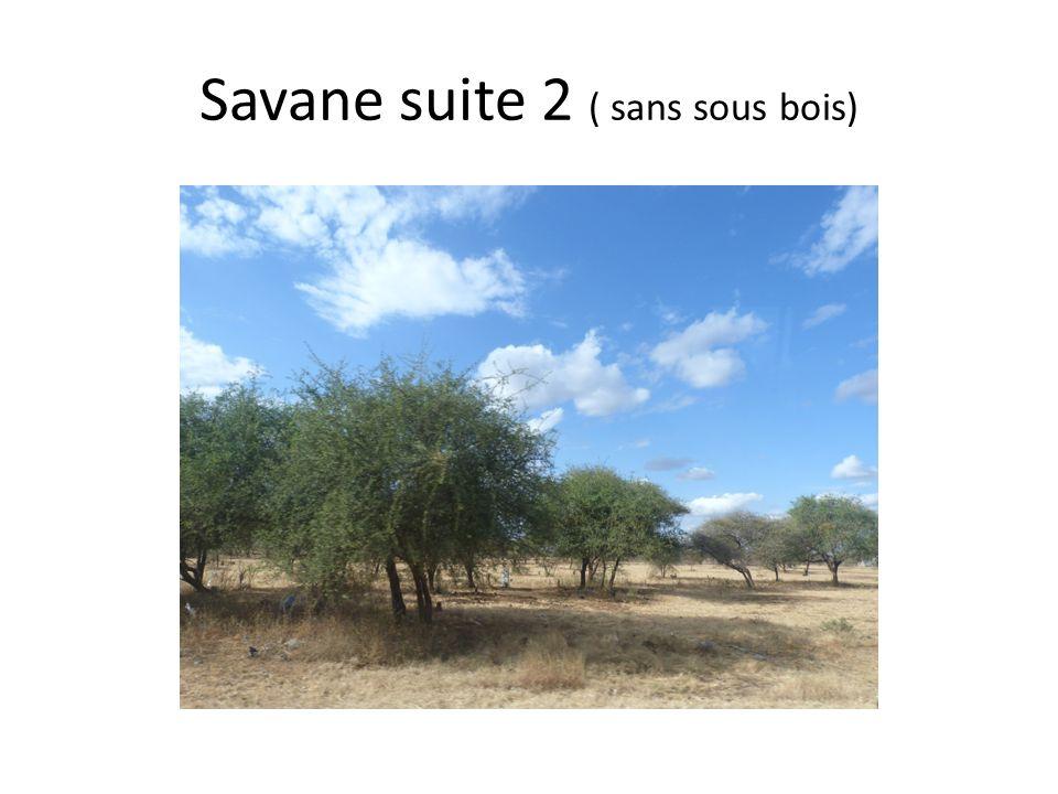 3,Les paysages naturels typiques tanzaniens 3.4 Définition de la Savane La savane est une formation se développant en zone tropicale comme les steppes africaines ( ne pas confondre avec les steppes de lhémisphère nord toundra sibérienne, mongolienne etc…).