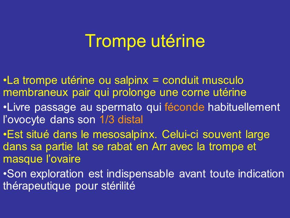 Trompe utérine La trompe utérine ou salpinx = conduit musculo membraneux pair qui prolonge une corne utérine Livre passage au spermato qui féconde habituellement lovocyte dans son 1/3 distal Est situé dans le mesosalpinx.