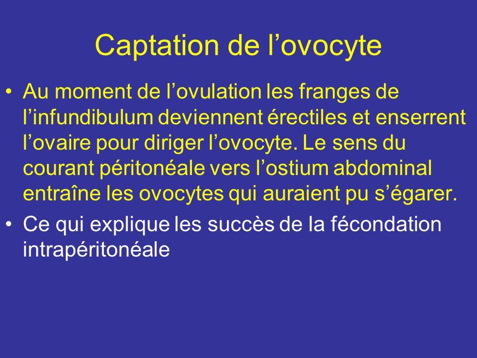 Anatomie fonctionnelle La trompe présente une double fonction : –captation de lovocyte –Transit des gamètes et du zygote