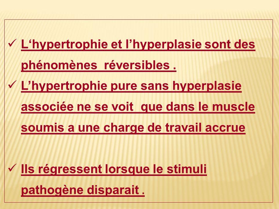 Lhypertrophie et lhyperplasie sont des phénomènes réversibles. Lhypertrophie pure sans hyperplasie associée ne se voit que dans le muscle soumis a une