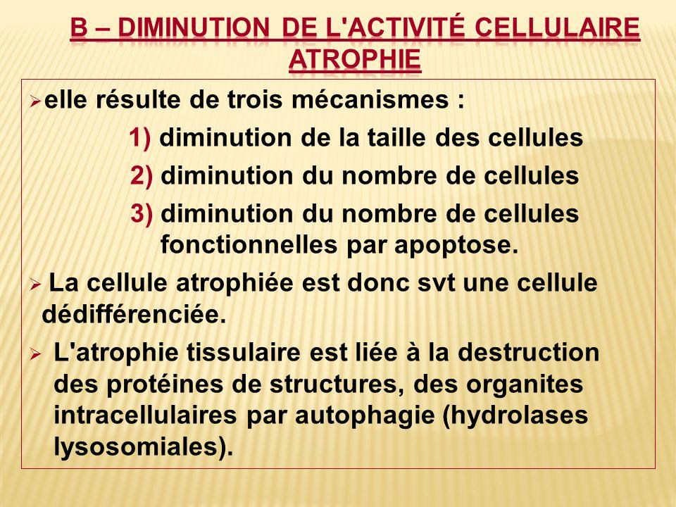 elle résulte de trois mécanismes : 1) diminution de la taille des cellules 2) diminution du nombre de cellules 3) diminution du nombre de cellules fon