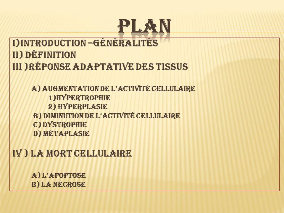 I)introduction –généralités Ii) définition Iii )réponse adaptative des tissus a) augmentation de lactivité cellulaire 1)hypertrophie 2) hyperplasie B)