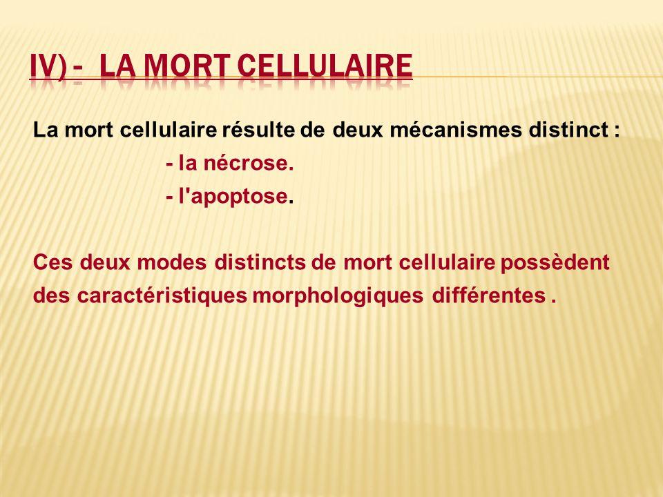 La mort cellulaire résulte de deux mécanismes distinct : - la nécrose. - l'apoptose. Ces deux modes distincts de mort cellulaire possèdent des caracté