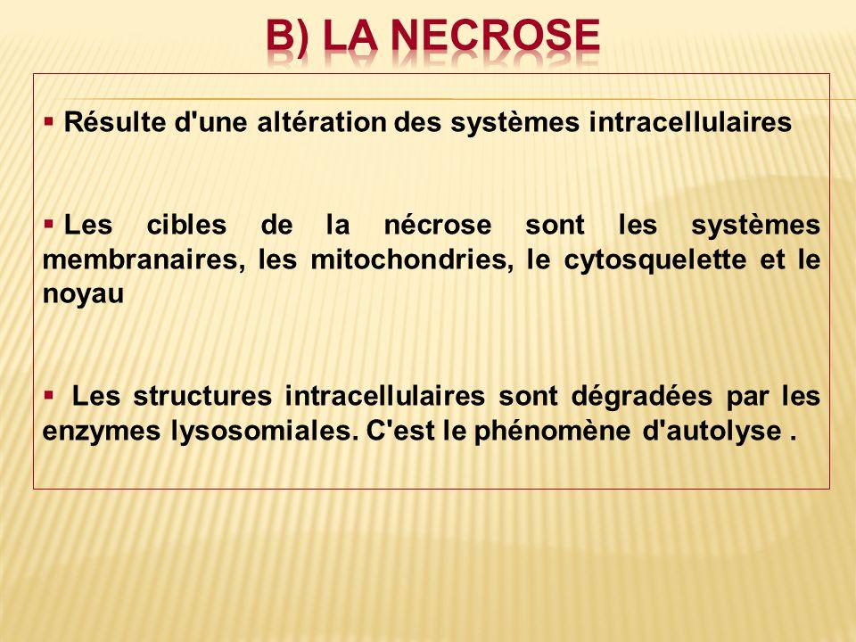 Résulte d'une altération des systèmes intracellulaires Les cibles de la nécrose sont les systèmes membranaires, les mitochondries, le cytosquelette et