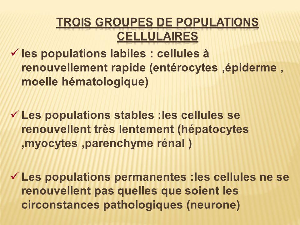 les populations labiles : cellules à renouvellement rapide (entérocytes,épiderme, moelle hématologique) Les populations stables :les cellules se renou