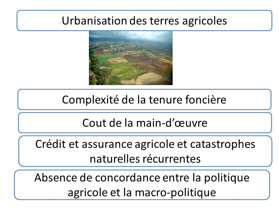 Urbanisation des terres agricoles Absence de concordance entre la politique agricole et la macro-politique Crédit et assurance agricole et catastrophes naturelles récurrentes Cout de la main-dœuvre Complexité de la tenure foncière
