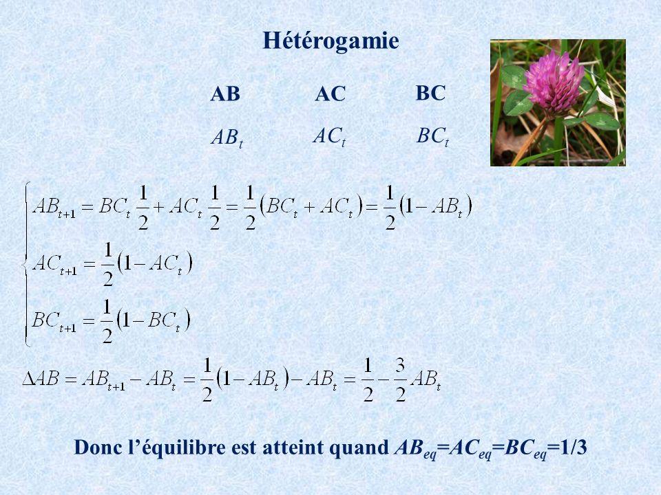 Hétérogamie ABAC BC AB t AC t BC t Donc léquilibre est atteint quand AB eq =AC eq =BC eq =1/3