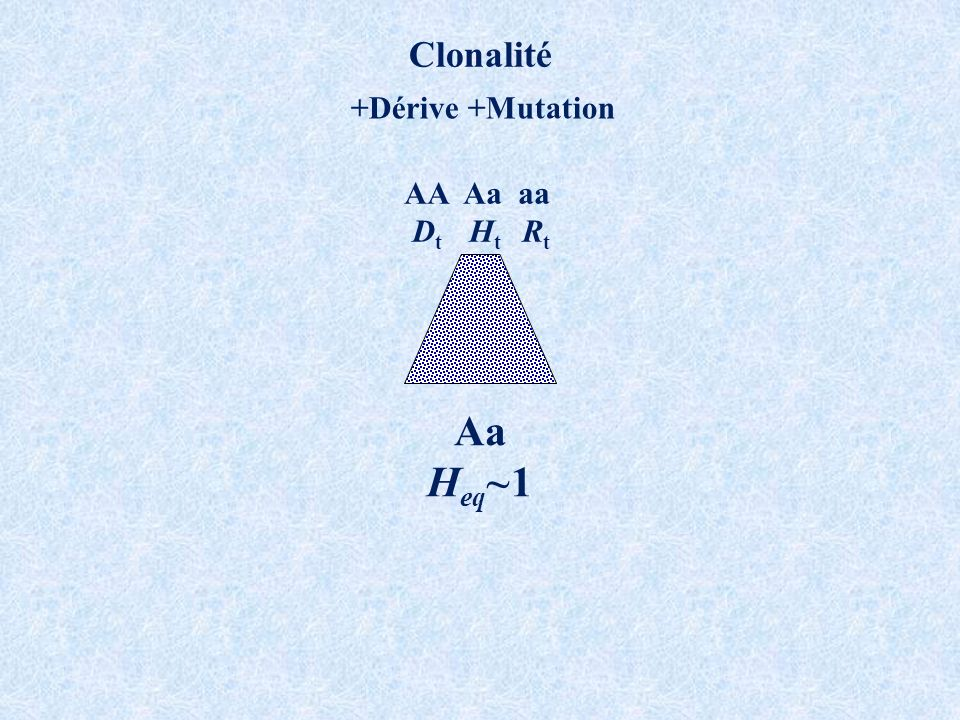 Clonalité +Dérive +Mutation AA Aa aa D t H t R t Aa H eq ~1