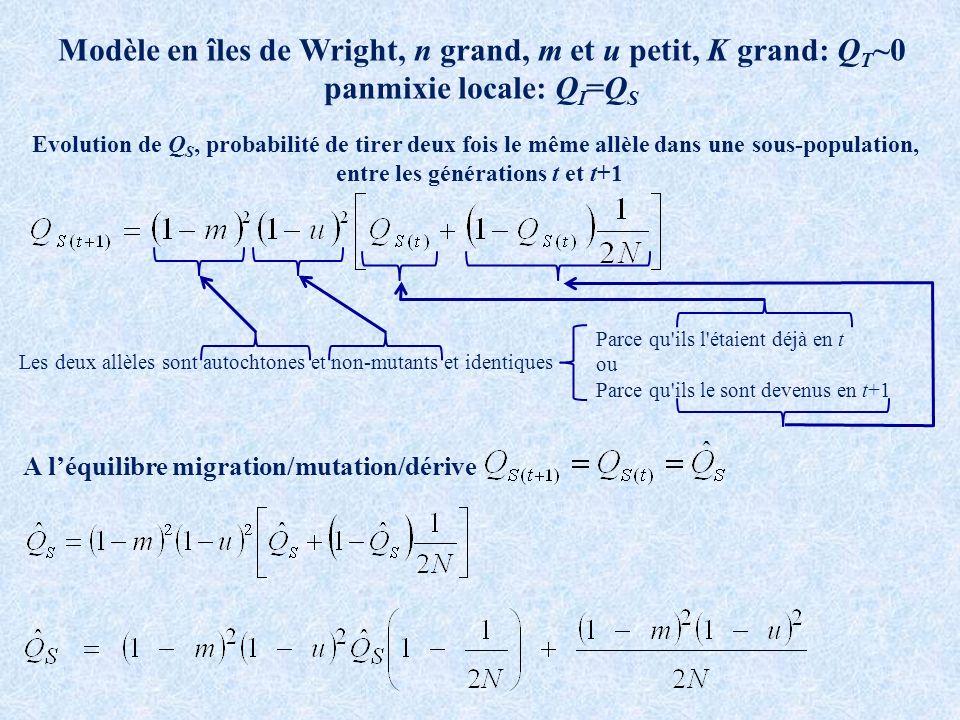 Modèle en îles de Wright, n grand, m et u petit, K grand: Q T ~0 panmixie locale: Q I =Q S A léquilibre migration/mutation/dérive Evolution de Q S, probabilité de tirer deux fois le même allèle dans une sous-population, entre les générations t et t+1 Les deux allèles sont autochtones et non-mutants et identiques Parce qu ils l étaient déjà en t ou Parce qu ils le sont devenus en t+1