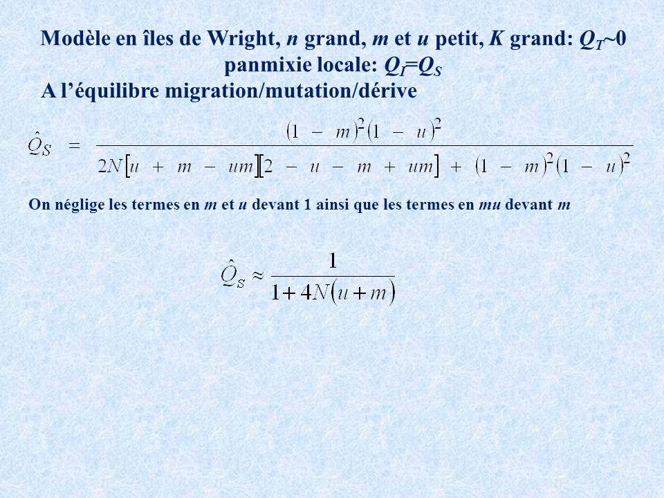 Modèle en îles de Wright, n grand, m et u petit, K grand: Q T ~0 panmixie locale: Q I =Q S A léquilibre migration/mutation/dérive On néglige les termes en m et u devant 1 ainsi que les termes en mu devant m