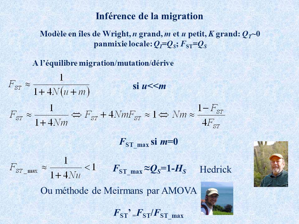 Inférence de la migration Modèle en îles de Wright, n grand, m et u petit, K grand: Q T ~0 panmixie locale: Q I =Q S ; F ST =Q S A léquilibre migration/mutation/dérive si u<<m F ST_max si m=0 F ST_maxQ S =1-H S F ST = F ST /F ST_max Hedrick Ou méthode de Meirmans par AMOVA