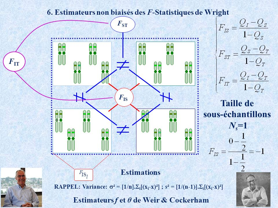 6. Estimateurs non biaisés des F-Statistiques de Wright F IS l F IS F ST Estimations RAPPEL: Variance: ² = [1/n]. i [(x i -x)²] ; s² = [1/(n-1)]. i [(