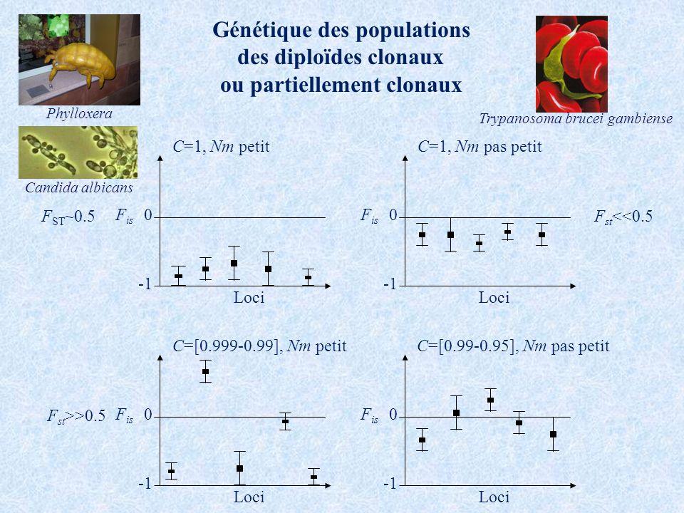Génétique des populations des diploïdes clonaux ou partiellement clonaux F is 0 Loci C=[0.99-0.95], Nm pas petit F is 0 Loci C=1, Nm petit F ST ~0.5 F is 0 Loci C=[0.999-0.99], Nm petit F st >>0.5 F is 0 Loci C=1, Nm pas petit F st <<0.5 Phylloxera Candida albicans Trypanosoma brucei gambiense