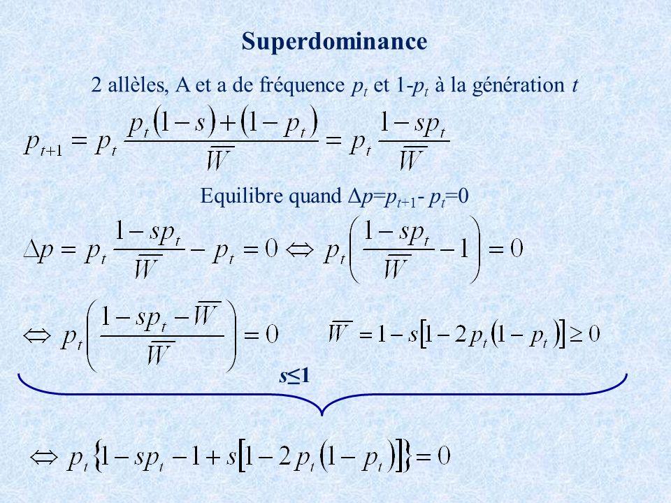 Superdominance 2 allèles, A et a de fréquence p t et 1-p t à la génération t Equilibre quand Δp=p t+1 - p t =0 s1