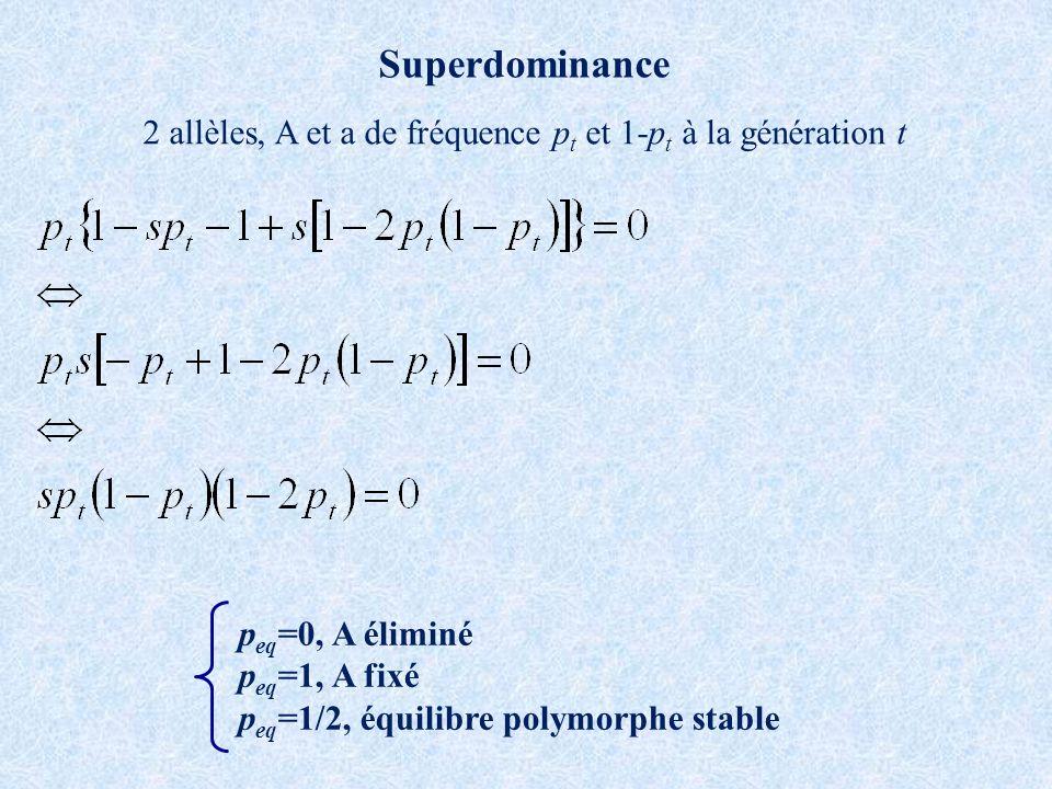 Superdominance 2 allèles, A et a de fréquence p t et 1-p t à la génération t p eq =0, A éliminé p eq =1, A fixé p eq =1/2, équilibre polymorphe stable