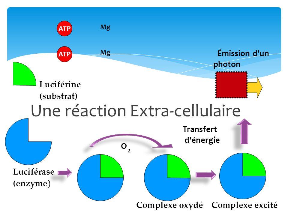Luciférase (enzyme ) Luciférine (substrat) ATP Mg O 2 Complexe excité Émission d'un photon Transfert d'énergie Complexe oxydé Une réaction Extra-cellu