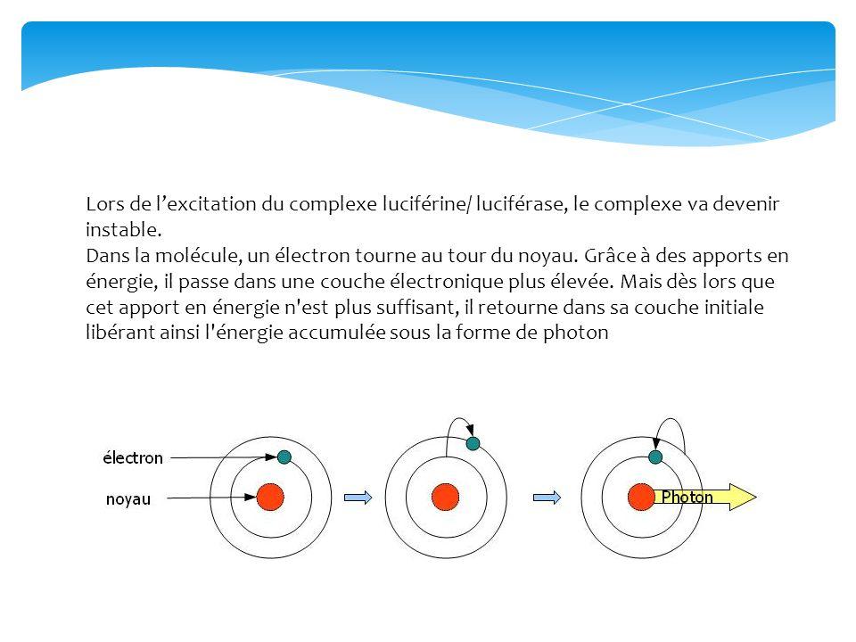Réaction simplifiée : (Luciférine + ATP) + (Luciférase + O²) => Oxyluciférine + Photons