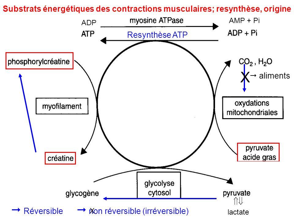lactate Substrats énergétiques des contractions musculaires; resynthèse, origine Resynthèse ATP AMP + Pi ADP X aliments Réversible non réversible (irr