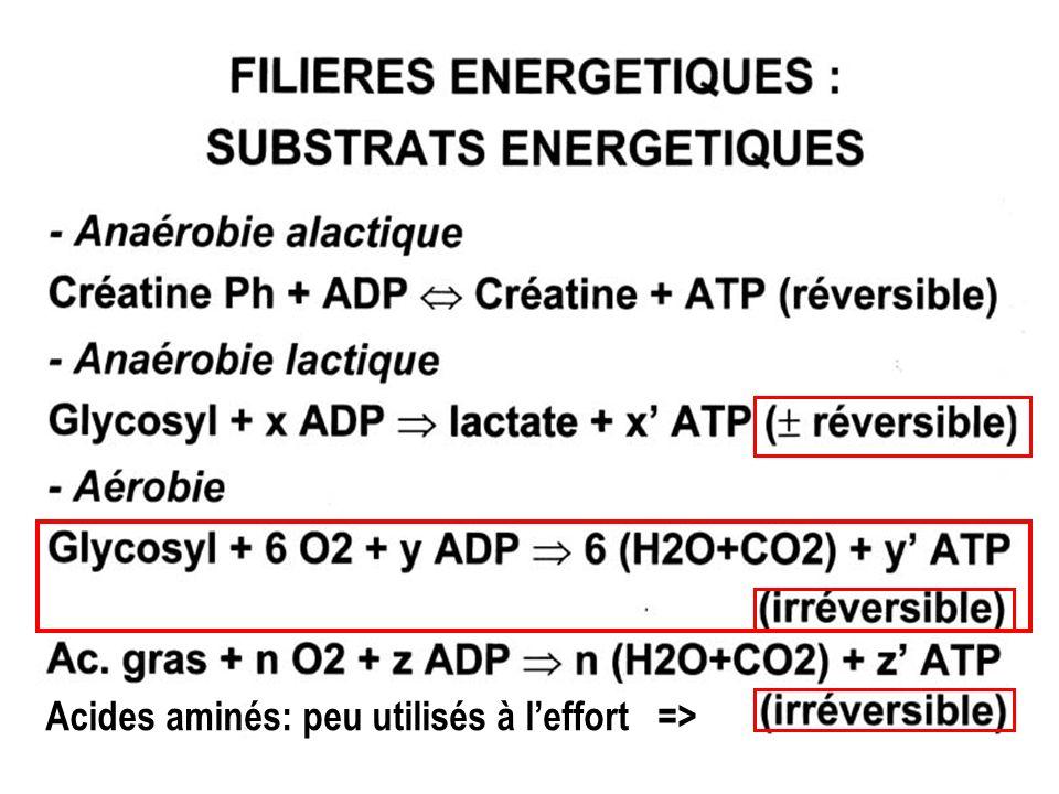 Acides aminés: peu utilisés à leffort =>