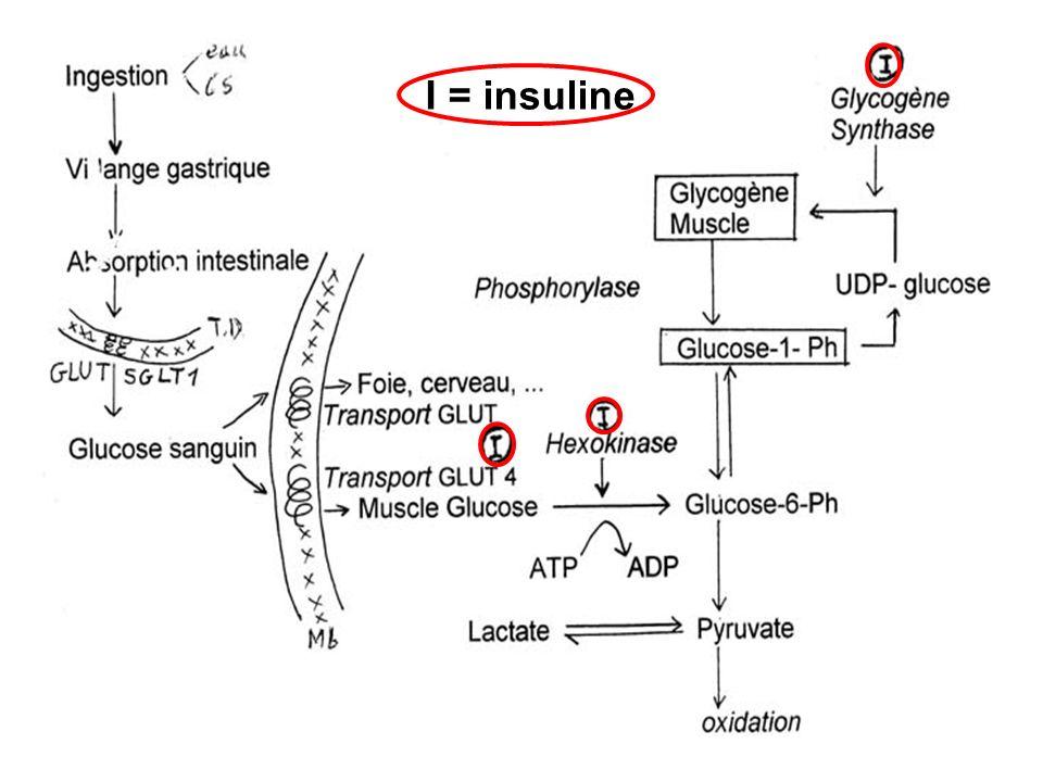 I = insuline