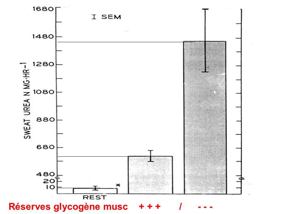 Réserves glycogène musc + + + / - - -