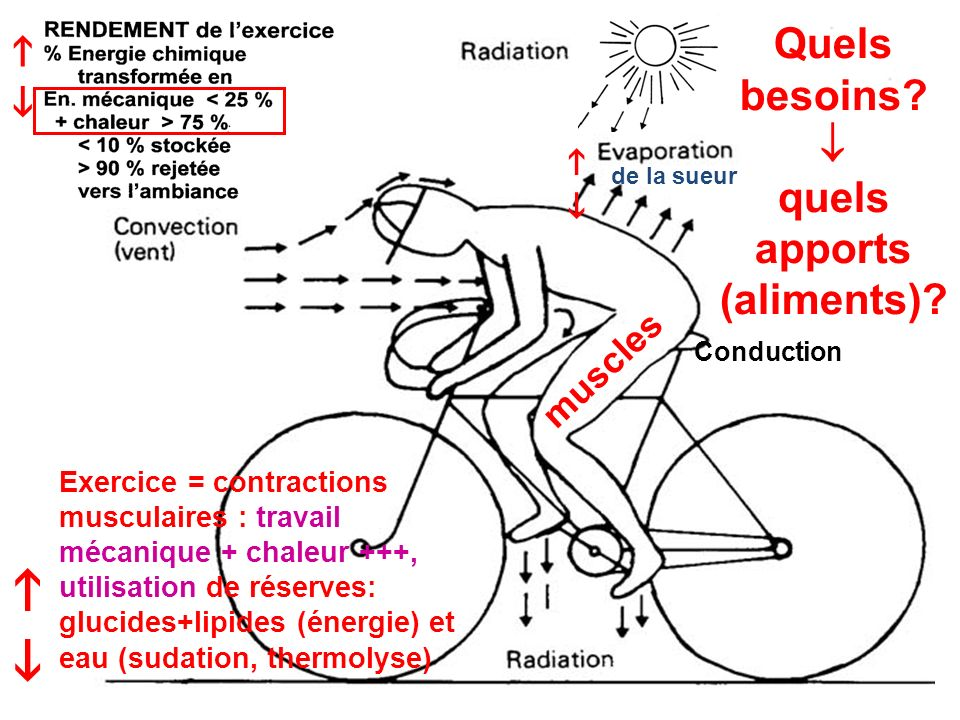 Délai dépuisement (min) glucides lipides Teneur initiale en glycogène (g / 100 g muscle)