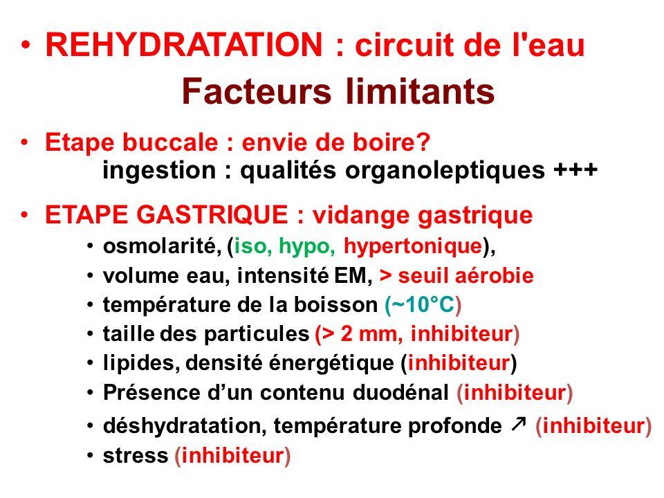 REHYDRATATION : circuit de l'eau Facteurs limitants Etape buccale : envie de boire? ingestion : qualités organoleptiques +++ ETAPE GASTRIQUE : vidange