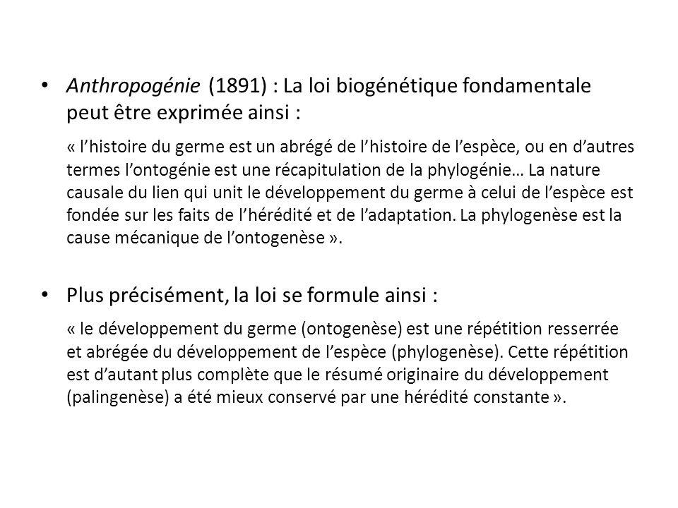 Anthropogénie (1891) : La loi biogénétique fondamentale peut être exprimée ainsi : « lhistoire du germe est un abrégé de lhistoire de lespèce, ou en dautres termes lontogénie est une récapitulation de la phylogénie… La nature causale du lien qui unit le développement du germe à celui de lespèce est fondée sur les faits de lhérédité et de ladaptation.