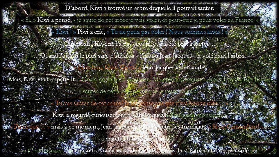 Dabord, Kiwi a trouvé un arbre duquelle il pouvait sauter. « Si, » Kiwi a pensé, « je saute de cet arbre je vais voler, et peut-être je peux voler en