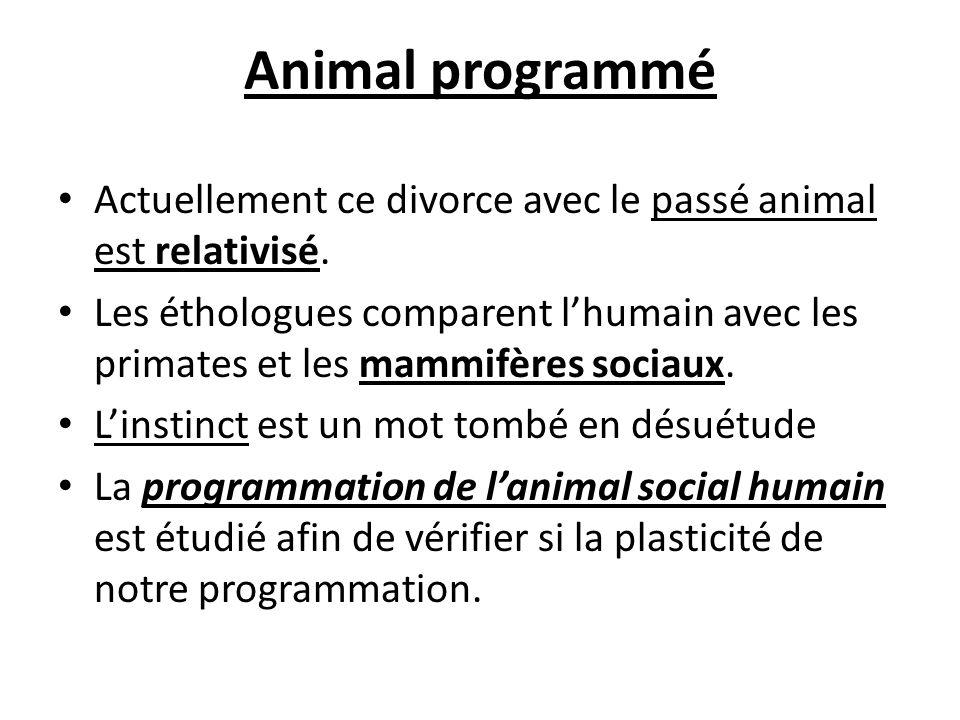 Animal programmé Actuellement ce divorce avec le passé animal est relativisé. Les éthologues comparent lhumain avec les primates et les mammifères soc