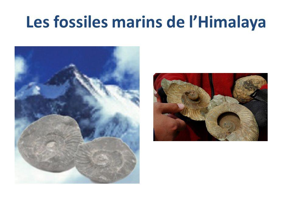 Les fossiles marins de lHimalaya