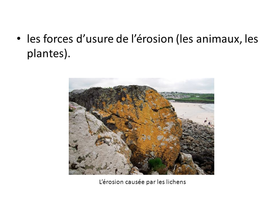 les forces dusure de lérosion (les animaux, les plantes). Lérosion causée par les lichens