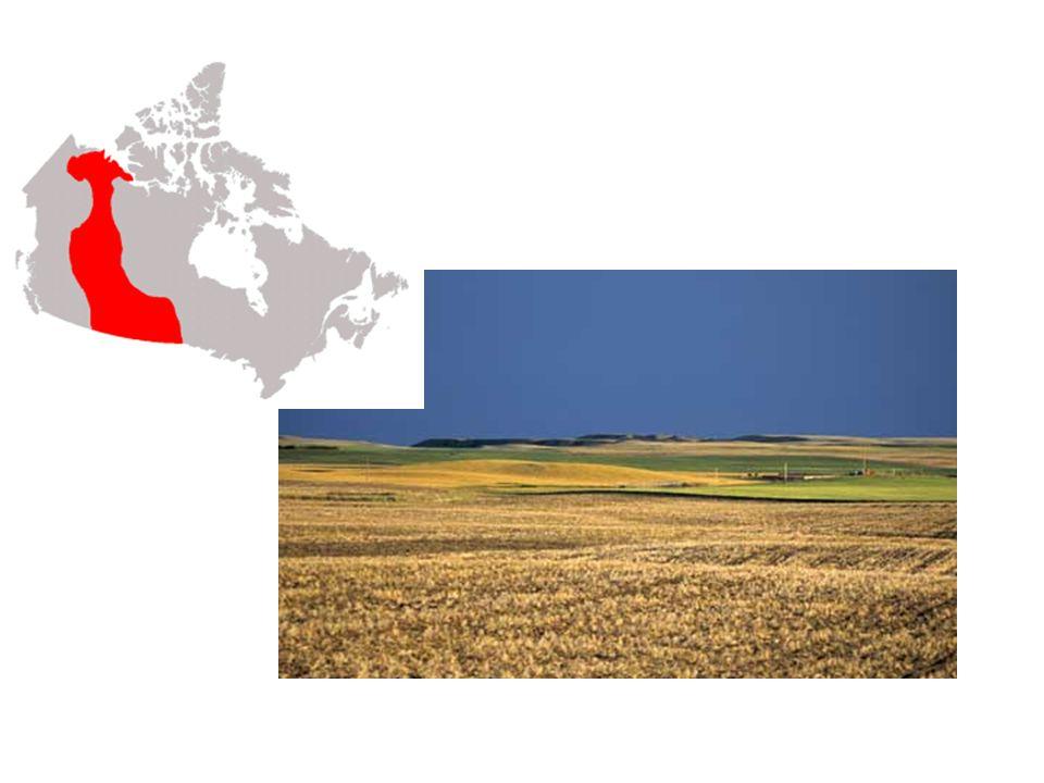 Basses-terres des Grands Lacs et du Saint-Laurent Les Basses-terres des Grands Lacs et du Saint- Laurent, situées au sud du Bouclier canadien, forment une autre région de plaines.