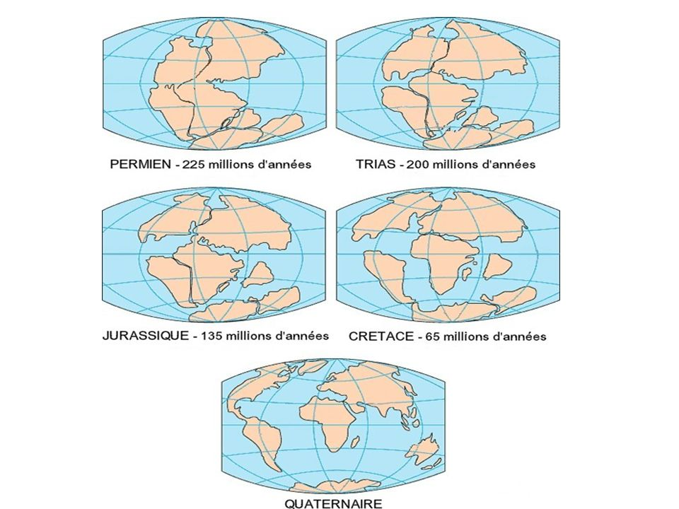 Wegner pensait quà une certaine époque tous les continents ne formaient quun supercontinent appelé la Pangée.
