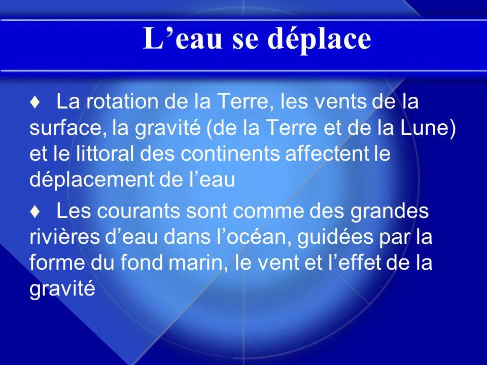 Leau se déplace La rotation de la Terre, les vents de la surface, la gravité (de la Terre et de la Lune) et le littoral des continents affectent le dé
