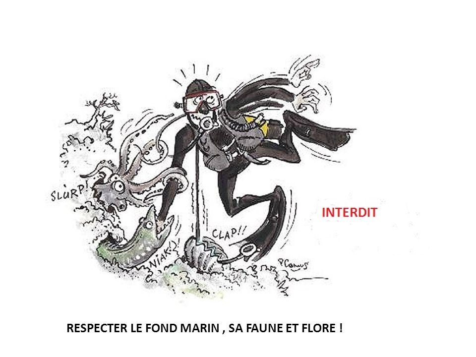 RESPECTER LE FOND MARIN, SA FAUNE ET FLORE !