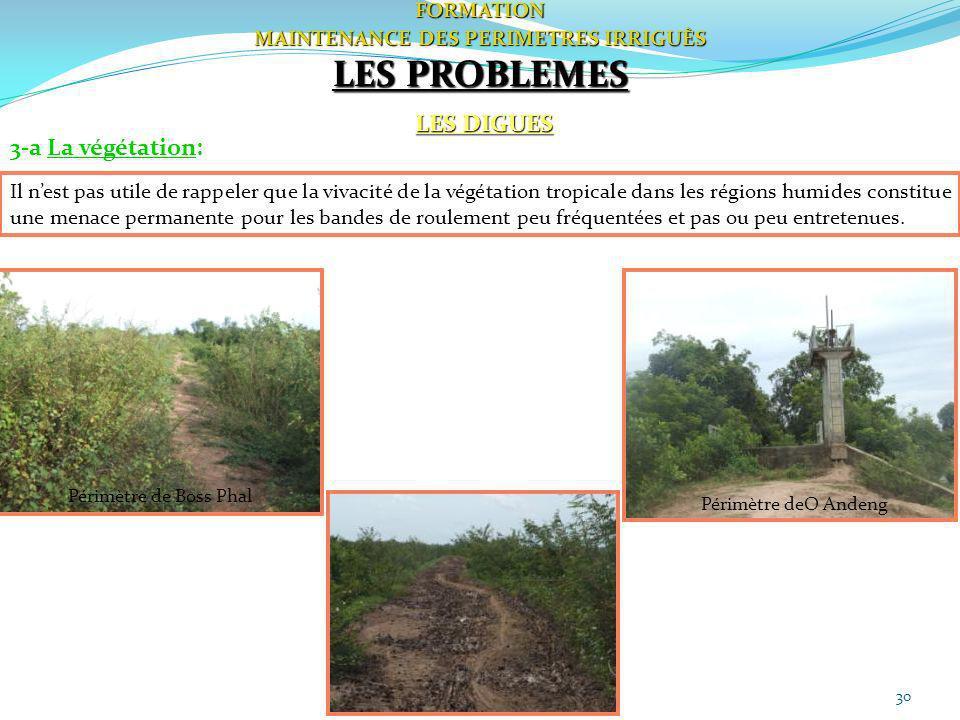 30FORMATION MAINTENANCE DES PERIMETRES IRRIGUÈS LES DIGUES LES PROBLEMES 3-a La végétation: Il nest pas utile de rappeler que la vivacité de la végéta