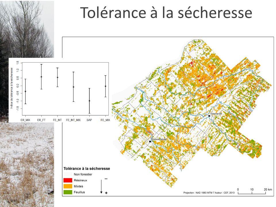 Tolérance à la sécheresse
