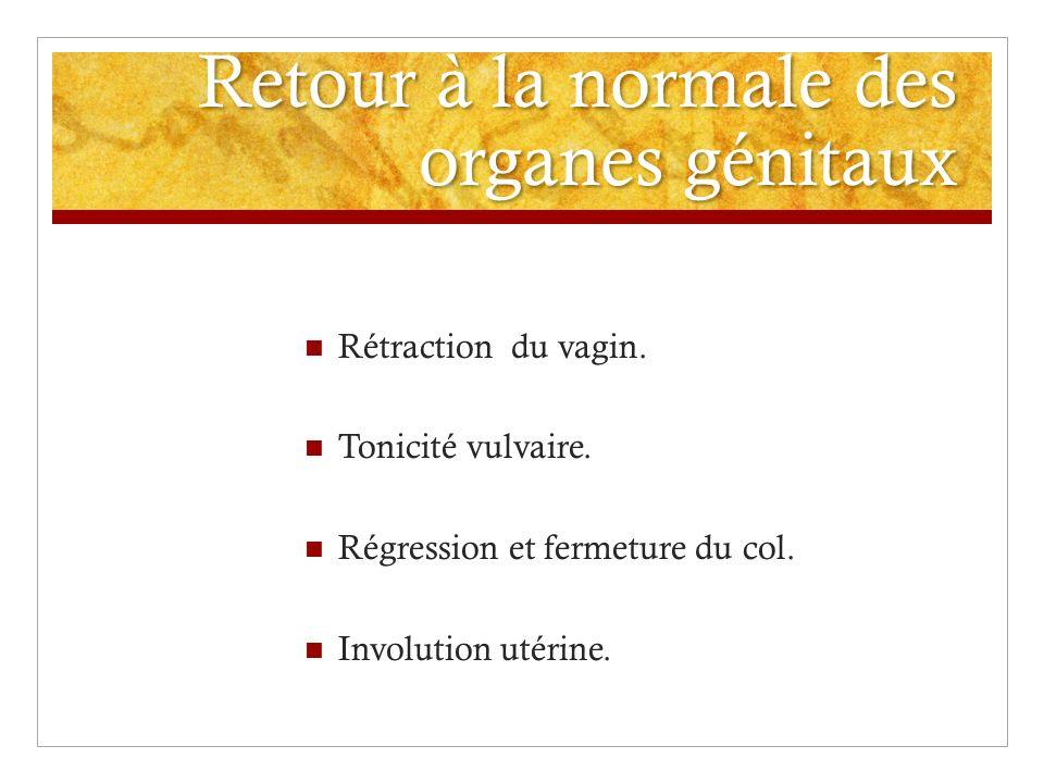 Retour à la normale des organes génitaux Rétraction du vagin. Tonicité vulvaire. Régression et fermeture du col. Involution utérine.