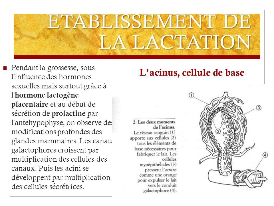 ETABLISSEMENT DE LA LACTATION Pendant la grossesse, sous l'influence des hormones sexuelles mais surtout grâce à l'hormone lactogène placentaire et au