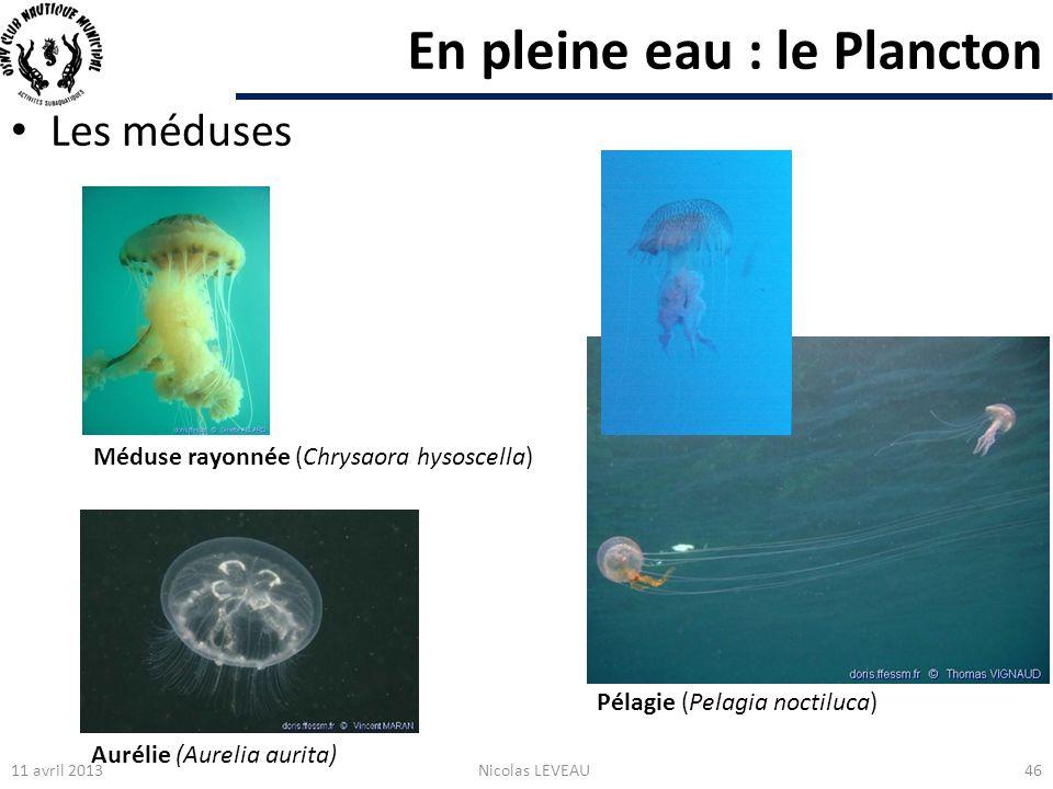 En pleine eau : le Plancton 11 avril 2013Nicolas LEVEAU46 Aurélie (Aurelia aurita) Pélagie (Pelagia noctiluca) Méduse rayonnée (Chrysaora hysoscella)