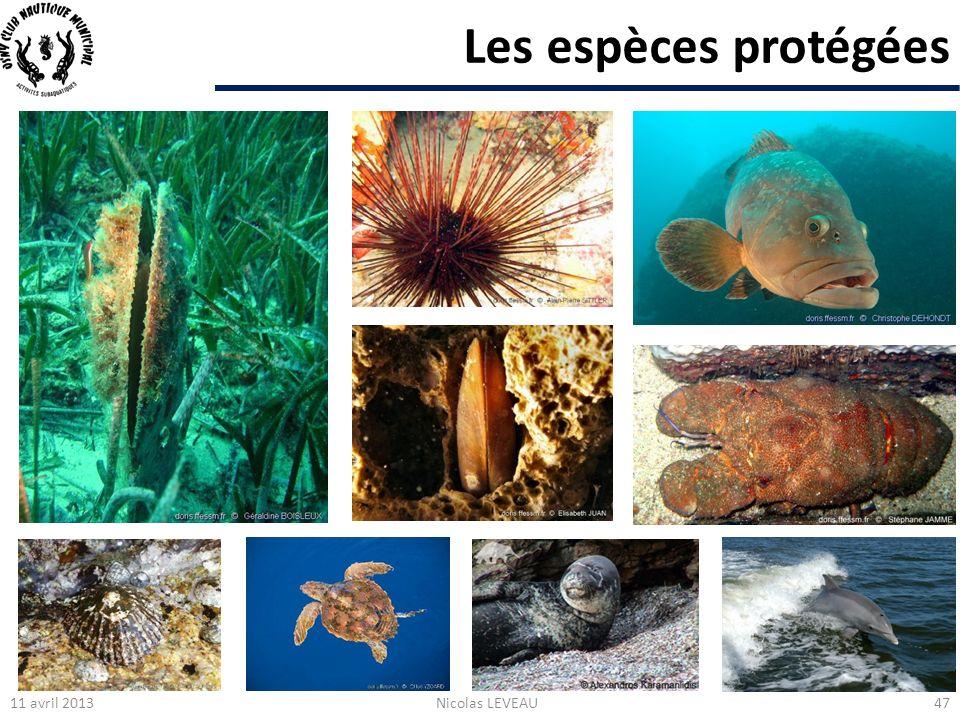 Les espèces protégées 11 avril 2013Nicolas LEVEAU47